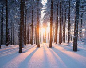 Зима в Сказочном лесу! Мороз и солнце, день чудесный! Чудесный вечер и волшебная ночь!